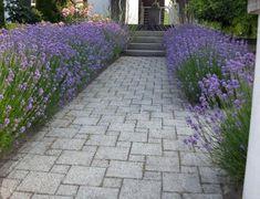 Lavendel am Wegrand