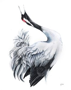 Common Crane (Grus grus), Watercolours by Karolina Kijak Watercolor Artists, Watercolor Bird, Watercolor Techniques, Ink Painting, Watercolor Illustration, Watercolor Paintings, Wildlife Paintings, Wildlife Art, Crane Drawing