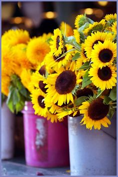 sunflowers in different colored pots