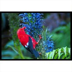 Native Hawaiian Plants (@native_hawaiian_plants) • Instagram photos and videos Hawaiian Plants, Nativity, Bird, Photo And Video, Videos, Photos, Animals, Instagram, Pictures