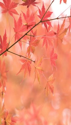 ~ peachy fall leaves ~