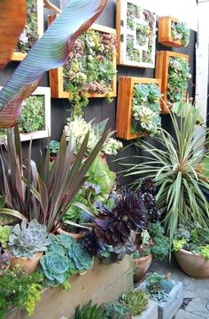 Stunning Vertical Garden for Wall Decor Ideas Do you have a blank wall? do you want to decorate it? the best way to that is to create a vertical garden wall inside your home. A vertical garden wall, also called… Continue Reading → Vertical Succulent Gardens, Vertical Garden Design, Succulent Wall Art, Succulent Landscaping, Small Garden Design, Succulents Garden, Backyard Landscaping, Landscaping Ideas, Colorful Succulents