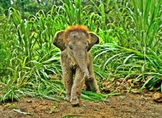 Fuzzy baby elephant,  pic courtesy of a friend of mine. Adorable!!