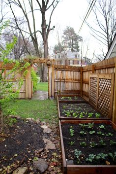 Lovely little spring herb/veggie garden