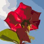 Rosa cuarteada