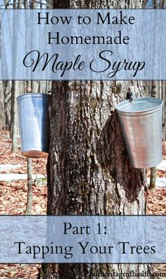 How to Make Homemade Maple Syrup: Tapping Your Maple Trees - Our Heritage of Health How to make homemade maple syrup: tapping your maple trees. All it takes is a few backyard maple trees and you can have your own homemade maple syrup! Maple Syrup Tree, Pure Maple Syrup, Maple Syrup Evaporator, Tapping Maple Trees, Homemade Maple Syrup, Maple Cookies, Pbs Food, Baking With Honey, How To Make Homemade