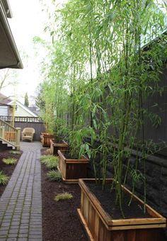 bambou en bacs en bois tout le long de l'allée en pavés