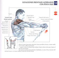 Elevaciones frontales alternas con polea baja | Front raises with alternating low pulley  - http://fitnessallya.com/elevaciones-frontales-alternas-con-polea-baja-front-raises-with-alternating-low-pulley/