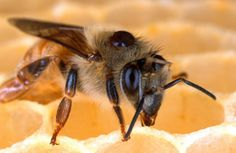Fed survey: 23% of bee colonies died this winter - The Washington Post