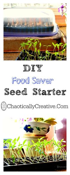 DIY Space Saving Seed Starter