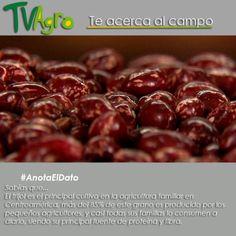 #AnotaElDato El Fríjol es uno de los alimentos más antiguos conocidos por el hombre y es un grano que no puede faltar en la canasta familiar.