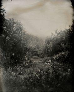 Allée des platanes - Isa Marcelli