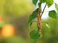 blog o ziołach, przyprawach, naturalnych kosmetykach, metodach dbania o zdrowie i urodę