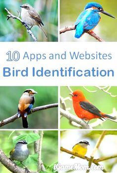 apps and websites for bird identification - nature science learning tools for kids