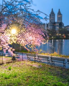 Night Photo At Central Park, Manhattan, New York Spring time with street light. Night Photos, From The Ground Up, Buy Frames, Central Park, Spring Time, Printing Process, Manhattan, Photo Art, Gallery Wall