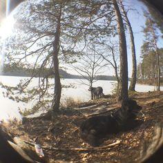 #pooch #mutt #outdoors #melkutin #isomelkutin