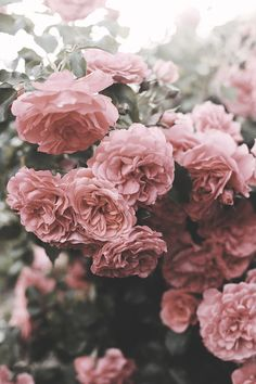 Summer garden | by *Nishe - softly desaturated summer roses