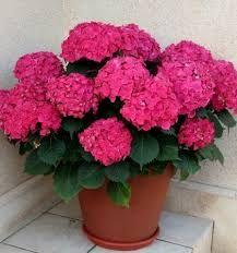 Pinterest the world s catalog of ideas - Plantas de flores para interiores ...