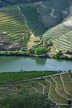 Terraced vineyards of the Douro valley wine region in northern Portugal. Places In Portugal, Visit Portugal, Portugal Travel, Spain And Portugal, Douro Portugal, Terraced Landscaping, Best Countries To Visit, Valley Landscape, Douro Valley