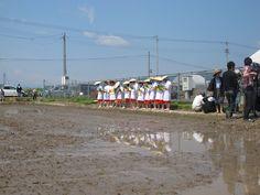 【御田植】平成24年5月26日、伝統的稲作行事『御田植』(主催・巴会)での、早乙女による田植の様子①です。