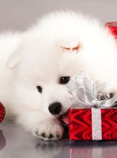 Holiday Christmas Dogs puppy