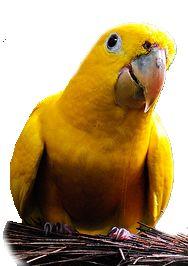 Lindas Gifs e Imagens: Mundo Exótico das Aves em Png