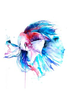 Betta peces imprimir acuarela Betta peces por WatercolorMary