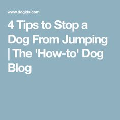 4 Tips to Stop a Dog From Jumping | The 'How-to' Dog Blog