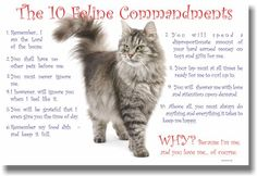 10 Feline Commandments