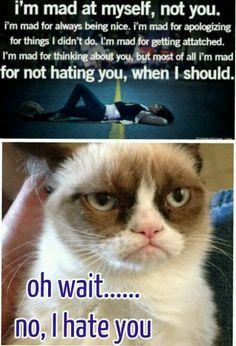 You got it right grumpy cat. I HATE HIM!!!!!! D: