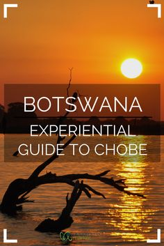 A guide to experiencing the best of Chobe National Park in Botswana. 20 top experiences + practical tips for your trip to Africa. | Uncornered Market Travel Blog: Travel Wide, Live Deep