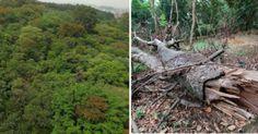 Prefeito Haddad: desaproprie a área ao redor e amplie o Parque Burle Marx, salve 5500 árvores, cursos d'água e a fauna !
