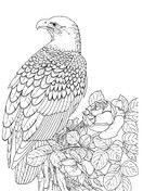 Realistischer Weißkopfseeadler Ausmalbild