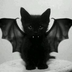 Kitten Halloween love OH MY GOD IT'S TOO CUTE