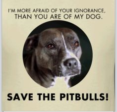 I'm actually not afraid of you at all. If you are afraid of a dog only because she's a pitbull - you need counseling. She's a dog.