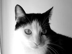 Cat & White © João Gata™