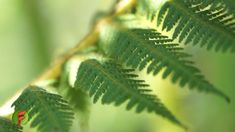 Qué plantas sembrar para proteger las fuentes de agua - TvAgro por Juan ... Moringa, Plantar, Plant Leaves, Picnic, Youtube, Tv, Gardens, Apple Water, Guava Tree