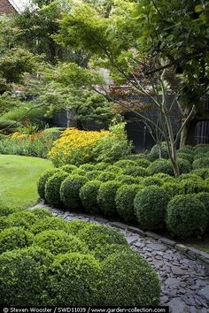 Interesting path.  Looks like small garden and love the buxus as ground cover