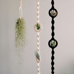 New in the shop: macramé air plant holders - All For Herbs And Plants Macrame Design, Macrame Art, Macrame Projects, Macrame Plant Hanger Patterns, Macrame Patterns, Wall Plant Hanger, Plant Wall, Air Plant Display, Plant Holders