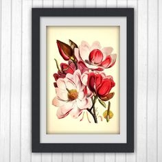 Wall print 67, a botanical art print produced from an vintage book plate.