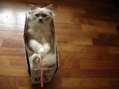 """25 ways to cuten up a box with a cat... found this funny blog on """"Social Petworking"""", 25 funny pictures of nothing more fun than being in a box... #cats #box #fun"""
