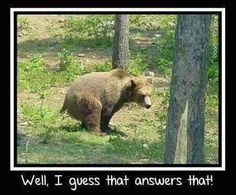 bears do it a lot.
