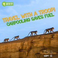 Find a carpool to make your way to work or school. Monkey Kingdom, Disney Movies Anywhere, Save Fuel, Green Tips, Cute Monkey, Monkeys, School, Nature, Movie Posters