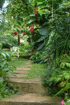 """Wandering Among the Plants at Hunte's Gardens, Barbados"" written and photographed by Karen Warren. Secluded corner at Hunte's Gardens"