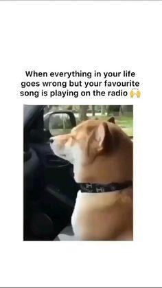 Just For Laughs Videos, Feel Good Videos, Crazy Funny Videos, Funny Videos For Kids, Funny Video Memes, Crazy Funny Memes, Really Cute Dogs, Really Funny Joke, Funny Stuff