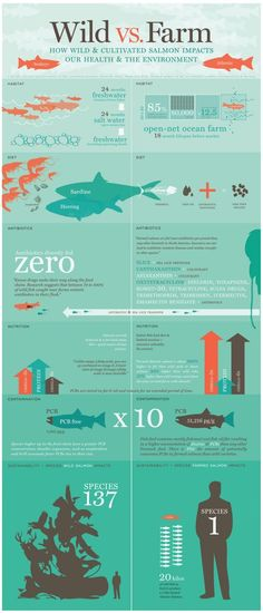 "Wild caught salmon ♥ Wild caught Alaskan salmon Wild vs Farm How Wild & Cultivated Salmon Impacts our Health & the Environment Infographic ""...farm salmon does indeed contain chemicals."