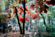In The Fall / Lucian Olteanu / Photographie, Numérique