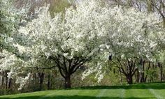 What sort of trees should you look to grow in your garden? Which ones look the best and aren't particularly hard to grow?