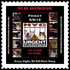 """2BKilled2day AFT12 #NYC #Cat https://www.facebook.com/SaveNYCats DETAILED INFO- """"LEAST U CAN DO IS READ BIOS,All R LIVING BEINGS"""""""