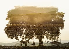 """""""Miranda Donkey & Farmer Resting Under a Cork Tree"""" - 2014It's a year and half since I finished a series of work on my travel  in Portugal, including this unpublished intentional double exposure. In November, next month in Gumbostrand Konst & Form, Finland, there'll be a debut exhibition titled Continuum Plateau, featuring 25 large works. More information coming soon!"""